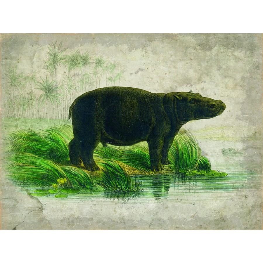 HIPPOPOTAME (120x90cm)