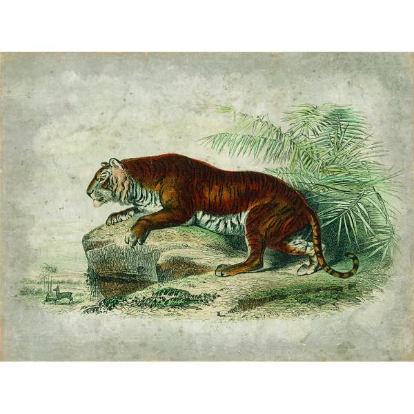 TIGRE ROYAL (120x90cm)