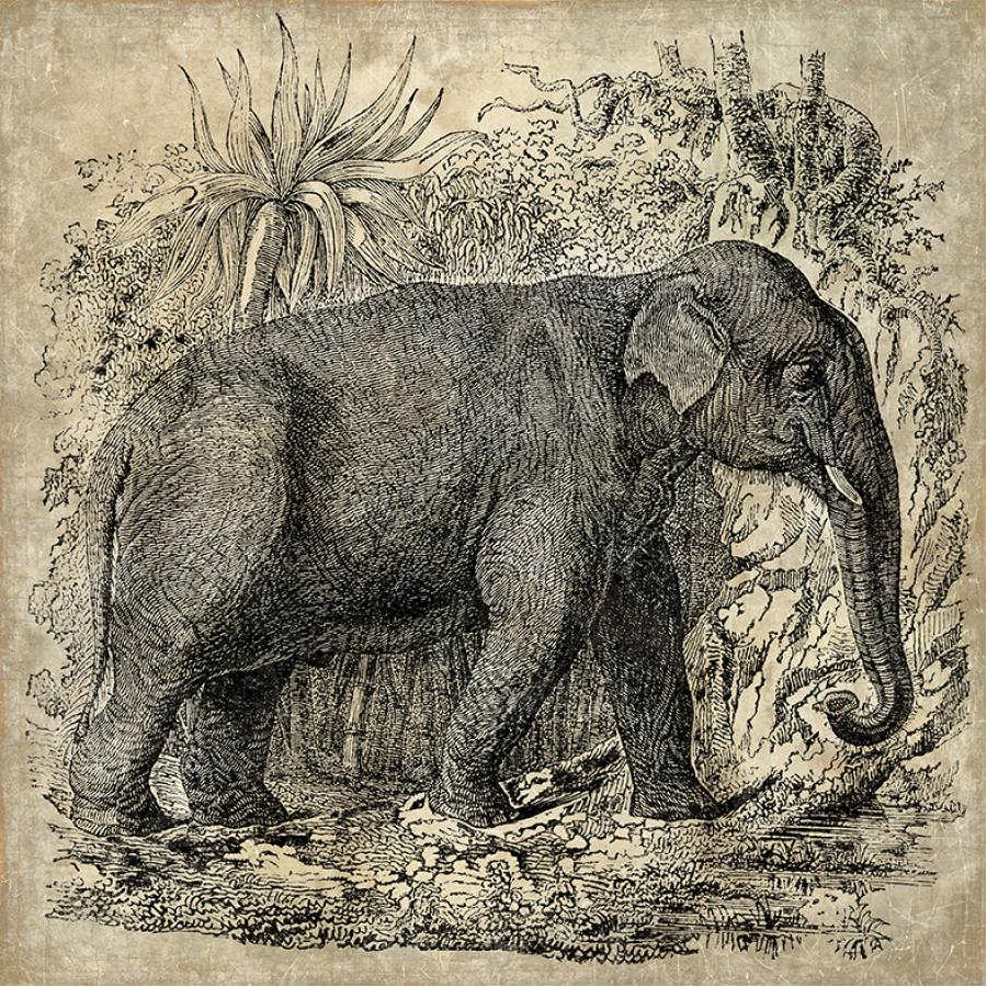 ELEPHANT N&B (120x120cm)